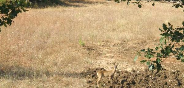 ancora-bambi.jpg
